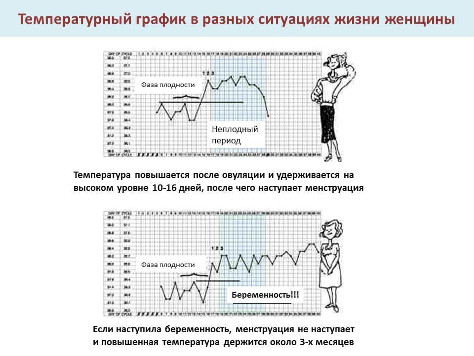 За сколько дней перед месячными падает базальная температура. бт во время месячные. базальная температура перед месячными – отклонения - новая медицина