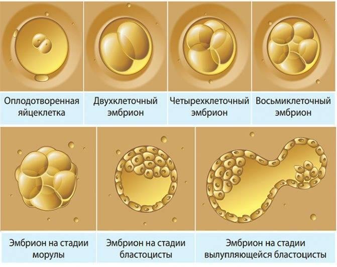 Причины неудачного эко, начало месячных после эко, как пережить и когда повторить, признаки, если эмбрион не прижился