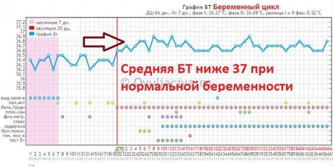 Базальная температура при беременности на ранних сроках и при овуляции