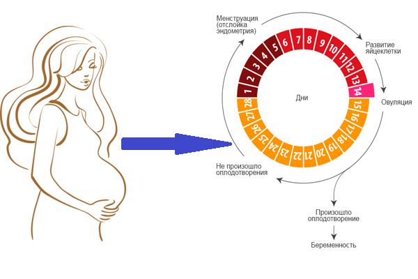 Дни когда можно забеременеть: как рассчитать без ошибок благоприятные для зачатия дни / mama66.ru