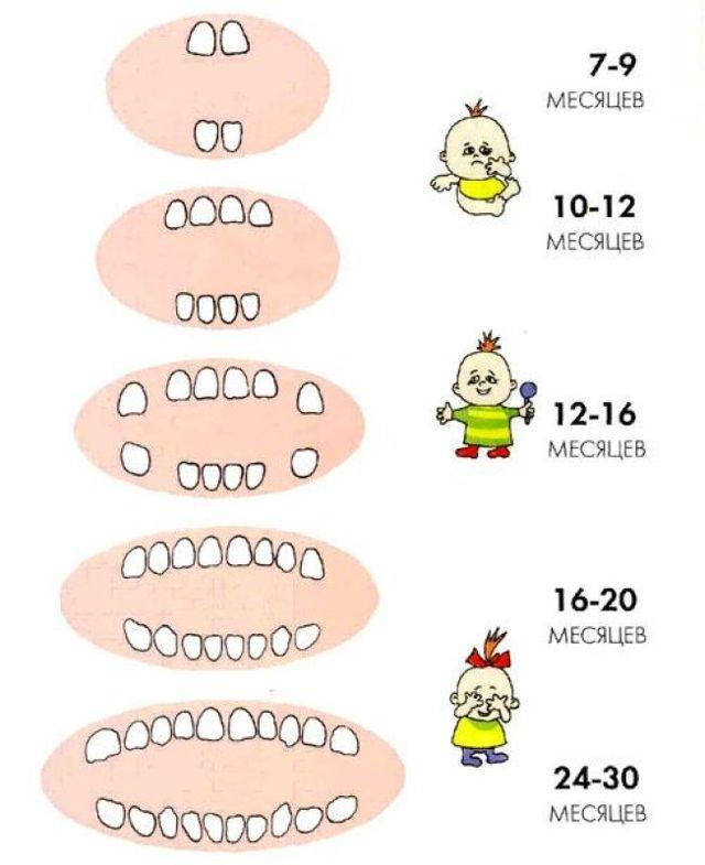 Когда режутся первые зубы у младенцев: во сколько месяцев начинают расти