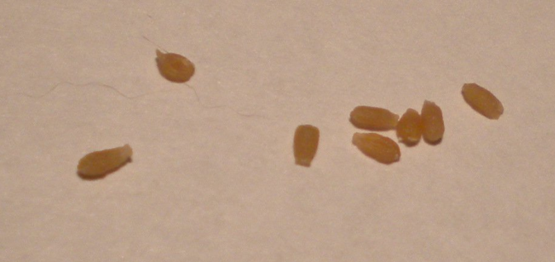 Глисты у ребенка: признаки, симптомы и лечение, фото