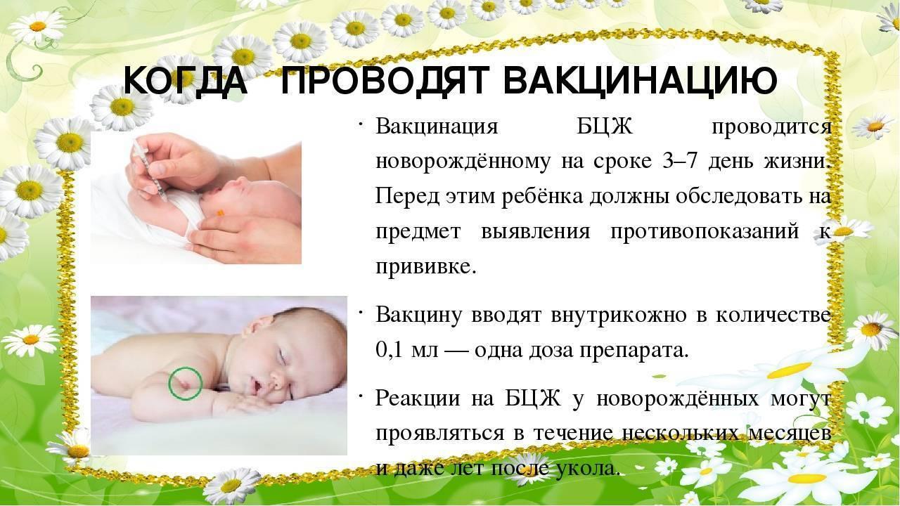 Прививка бцж у новорожденных: реакция, последствия, осложнения
