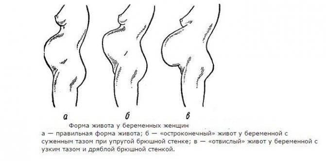 Размеры матки на ранних сроках беременности
