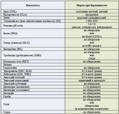 Общий анализ мочи: показатели и расшифровка результатов