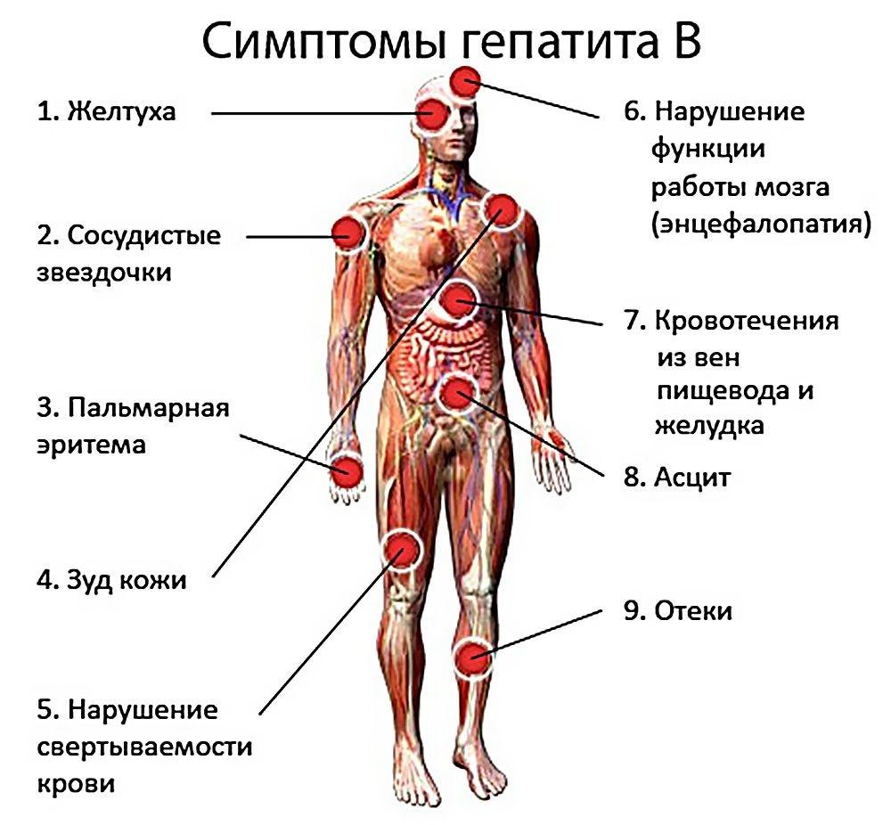 Пути передачи гепатита а: водный, пищевой, контактный