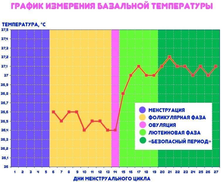 Какая базальная температура перед овуляцией, месячными (менструацией), пмс, при беременности