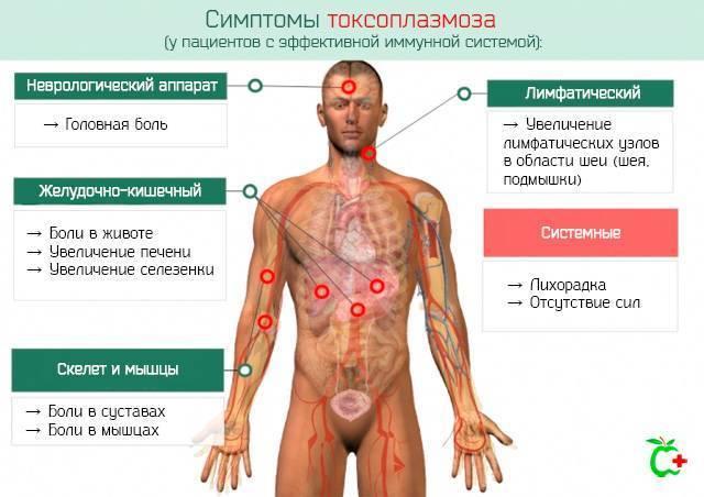 Токсоплазмоз у детей: причины, симптомы, лечение и последствия