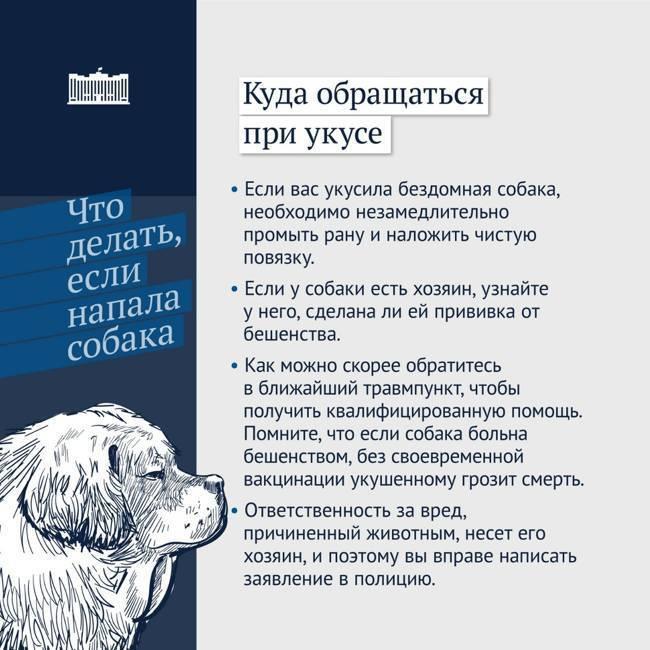 Собака покусала ребенка: что делать и какая ответственность хозяина собаки