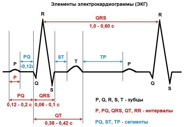 Расшифровка экг у взрослых - норма в таблице, расшифровка кардиограммы онлайн, что значат показатели