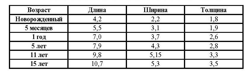 Каковы нормальные размеры селезенки и о чем говорит их увеличение