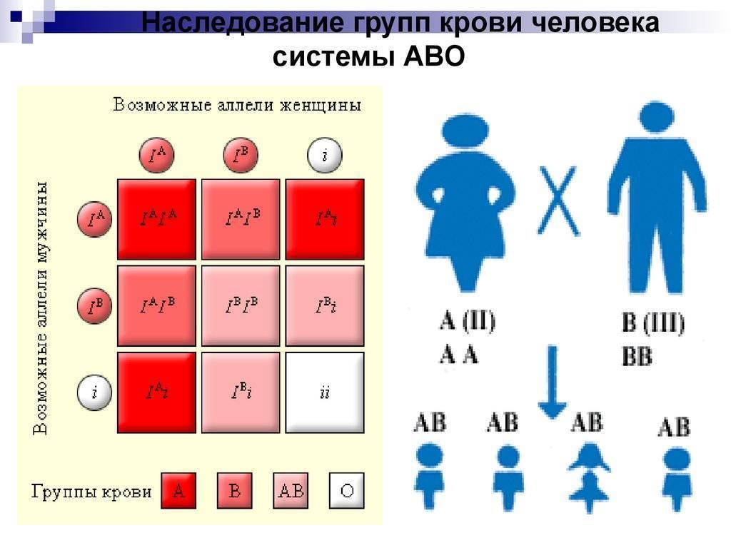 Наследование резус фактора у человека: чей Rh наследует ребенок, является ли признак доминантным?