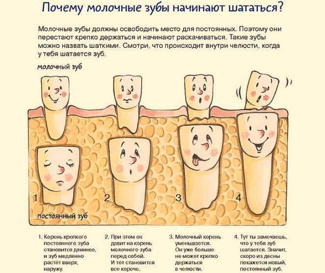 Больно ли удалять молочный зуб — зубы