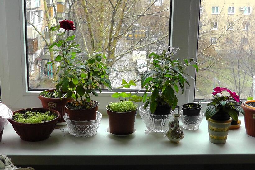 Какие цветы можно держать в детской комнате и как выбрать полезные