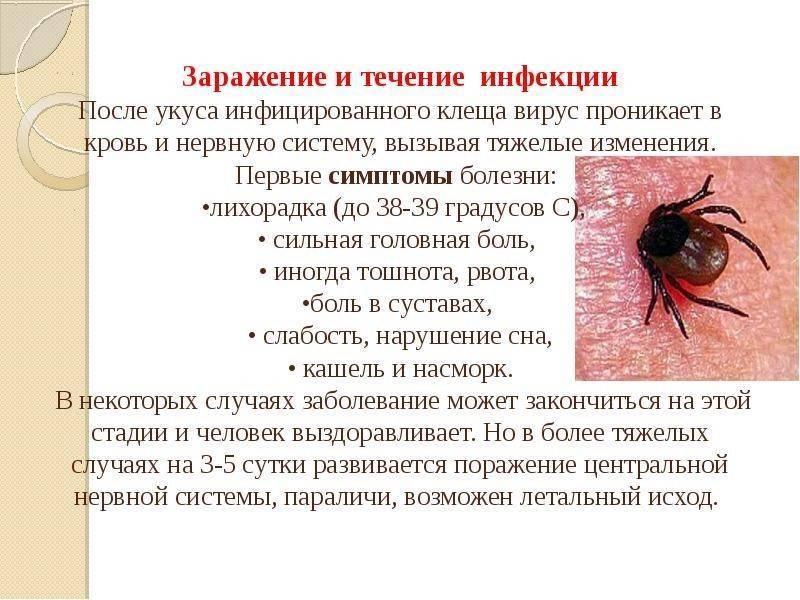 Клещевой боррелиоз – симптомы и методы лечения инфекции