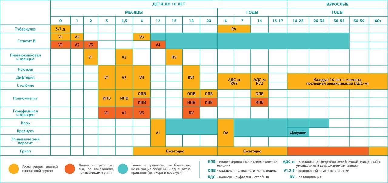 Памятка для родителей, когда и какие прививки делать ребенку – национальный календарь вакцинации