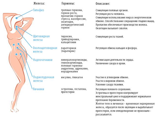 Сдаем гормональные анализы. анализы на гормоны для мужчин и женщин. как сдавать и когда сдавать - планирование беременности. эко