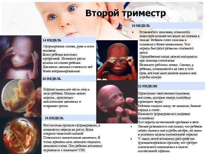 Определение пола будущего ребенка без узи: по крови, сердцебиению, животу, дате зачатия