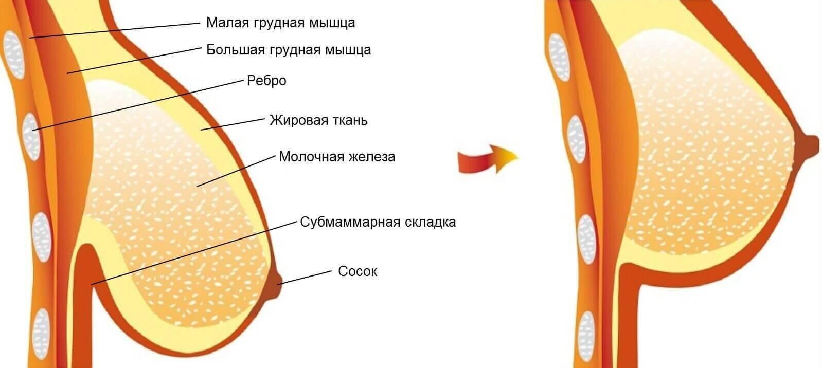 Ет сосков при беременности у женщин: какой он должен быть, нормально, если смена цвета не происходит на протяжении всего срока?