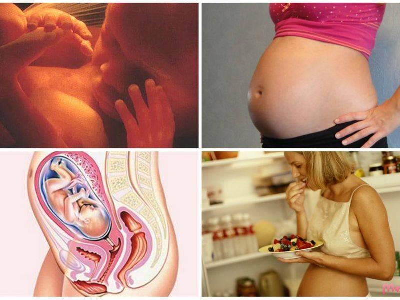 Беременность по месяцам
