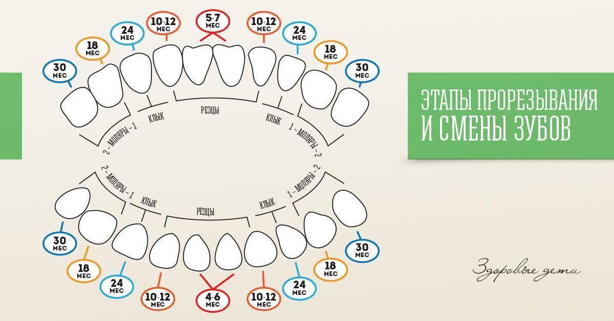 Сроки и нормы смены молочных зубов на постоянные у детей
