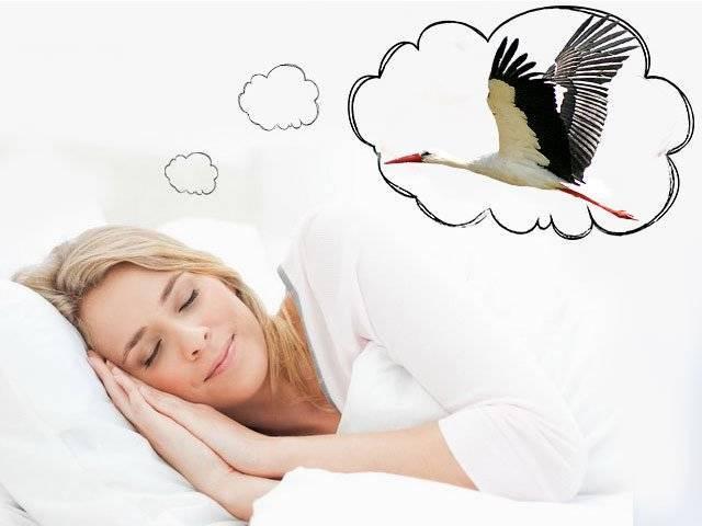 Какие сны снятся к беременности?