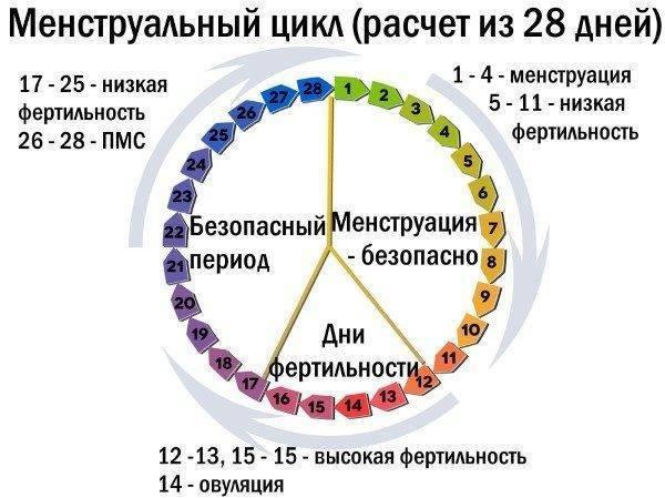 Фолликулометрия (24 фото): что это такое, на какой день цикла делать узи фолликулов и как оно проводится, расшифровка результатов