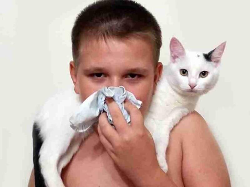 Аллергия на кошек. 9 признаков аллергии у ребенка на кошку