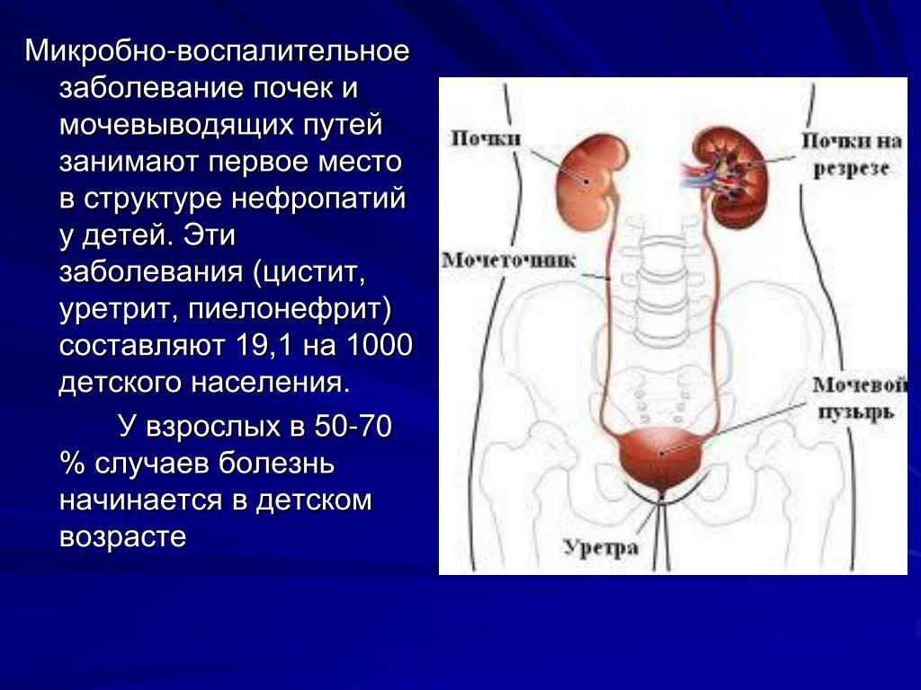 Воспаление почек у детей: симптомы и лечение, заболевания мочевыводящих путей