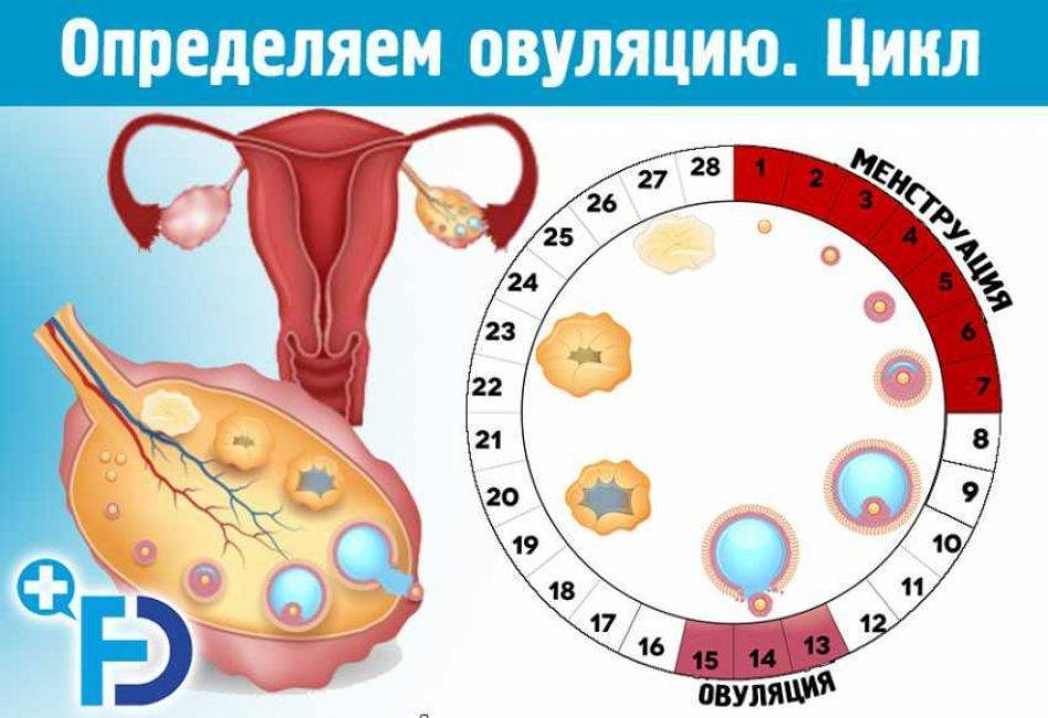Можно ли забеременеть не в дни овуляции: до или после дня выхода яйцеклетки или вообще без нее