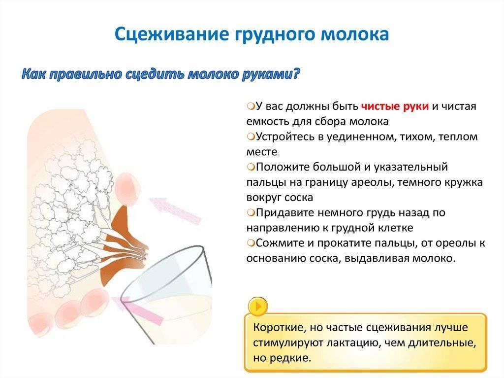 Как прекратить грудное вскармливание: советы доктора комаровского