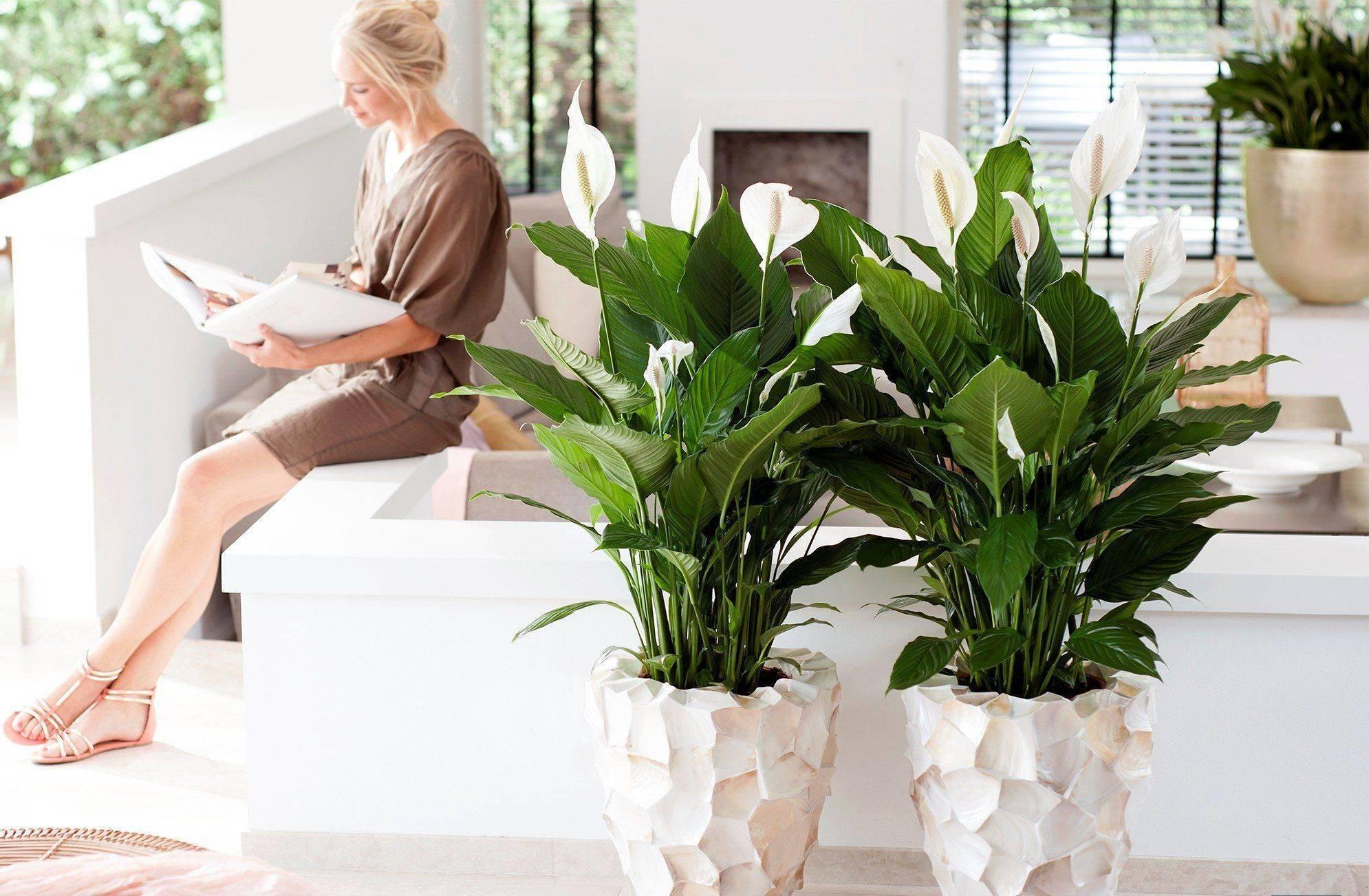 17 комнатных цветков, полезных для здоровья