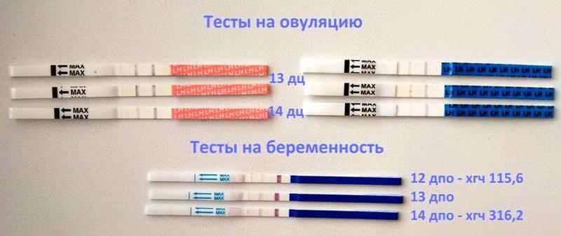 Через сколько после овуляции делать тест, чтобы определить беременность: на какой день, как пользоваться, когда наступит и какова точность