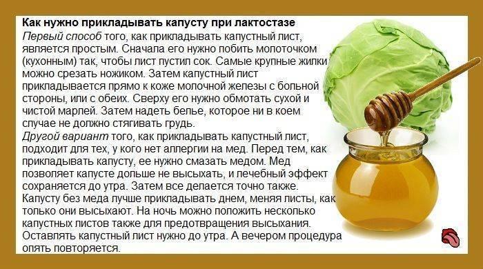 Капустный лист с медом от кашля — доступный и безопасный метод лечения кашля