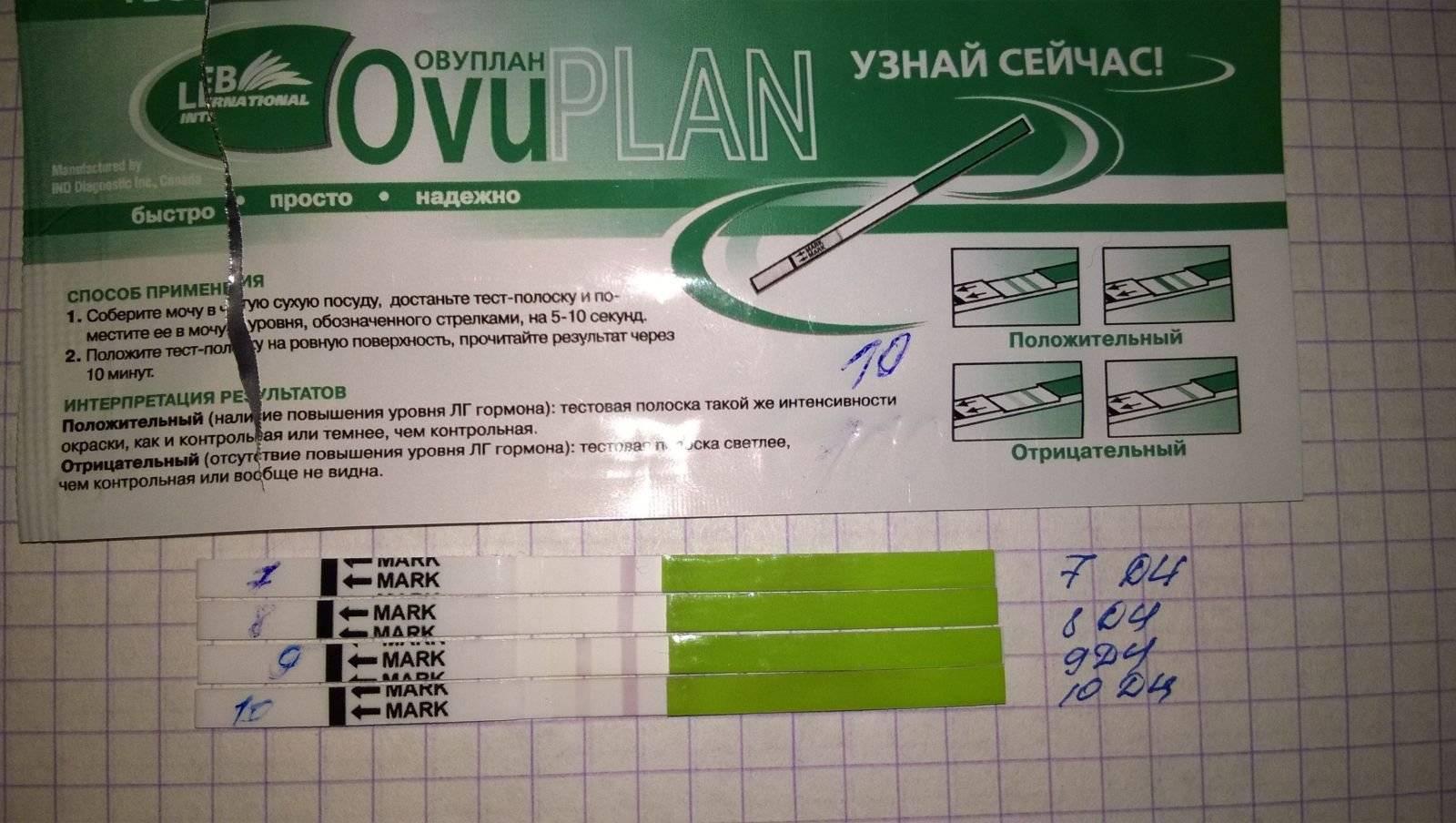Описание теста на овуляцию eviplan: пошаговое руководство