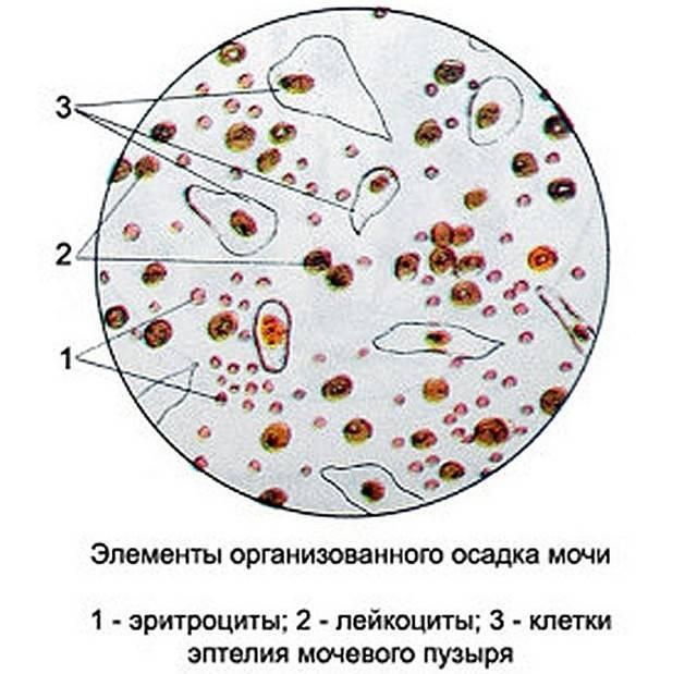 Лецитиновые зерна