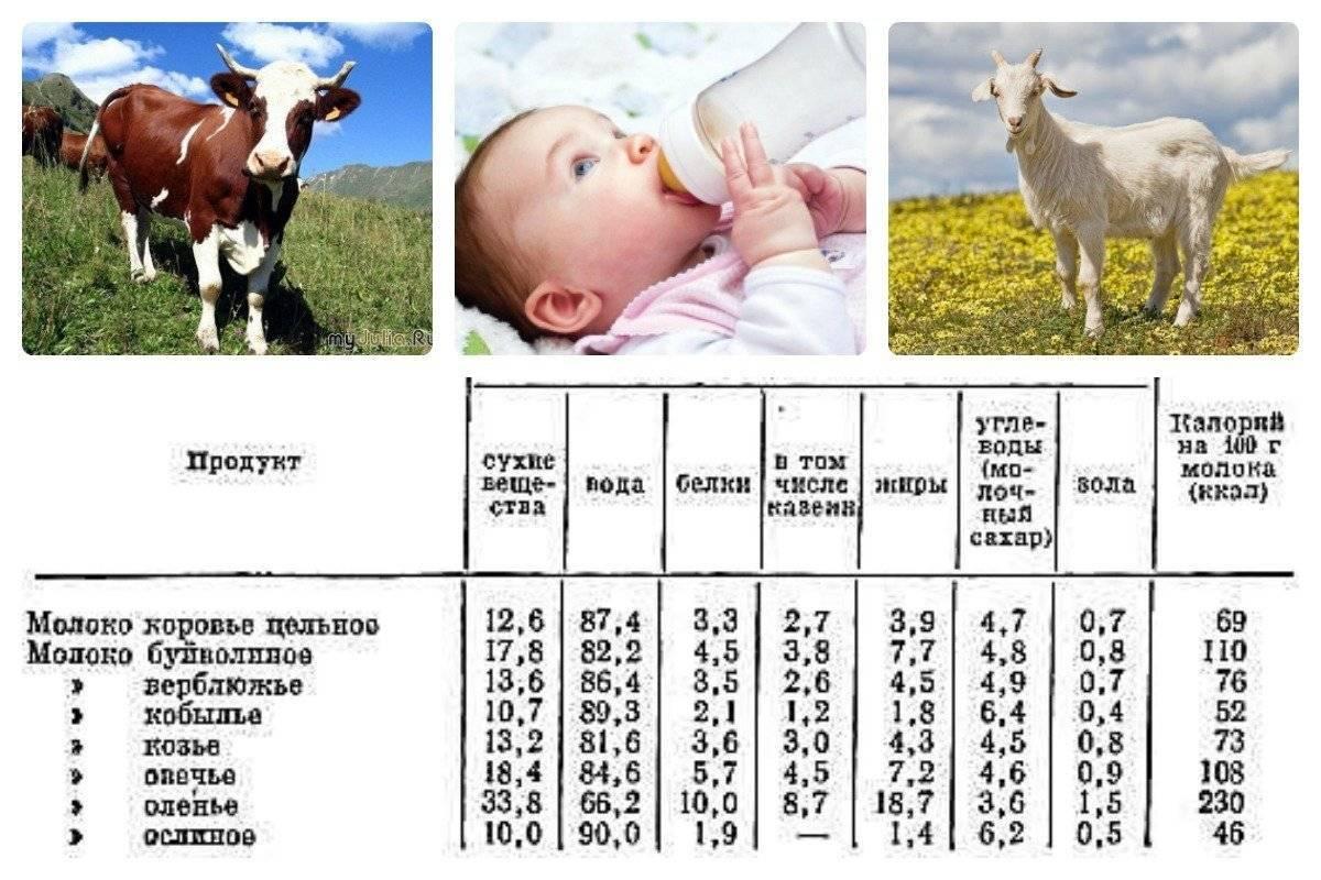 Козье молоко для грудничка: с какого возраста можно давать?