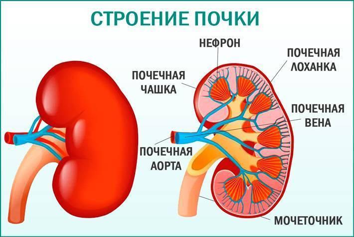 Расширение лоханки почки у ребенка: причины увеличения, нормы по узи и лечение | заболевания | vpolozhenii.com