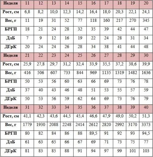 Бпр — что это такое? бипариетальный размер головы плода по неделям (таблица)