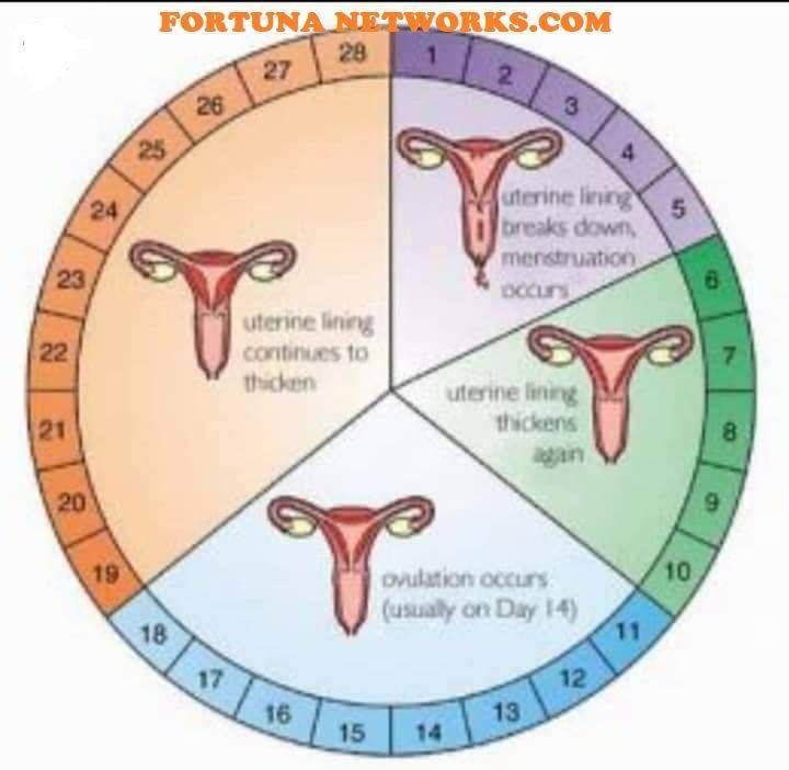 Что делать если сбой месячных. почему сбивается менструальный цикл и чем это грозит