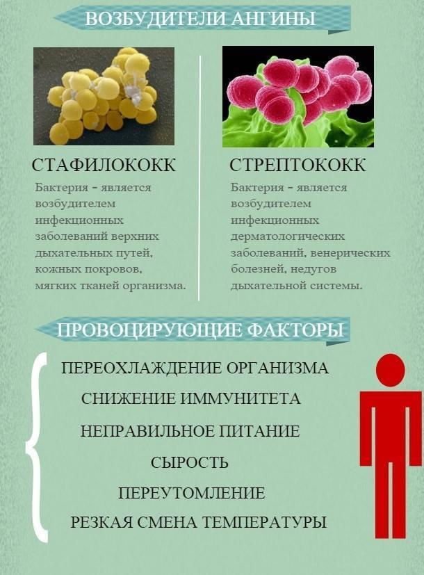 Вирусная ангина - отличие от бактериальной, первые проявления у ребенка и взрослого, терапия и осложнения