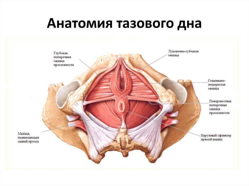 Способы восстановления влагалища после родов