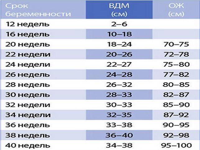 Окружность живота по неделям беременности: норма и размер, таблица ож и рост, обхват и объем плода, от чего зависит | rucheyok.ru