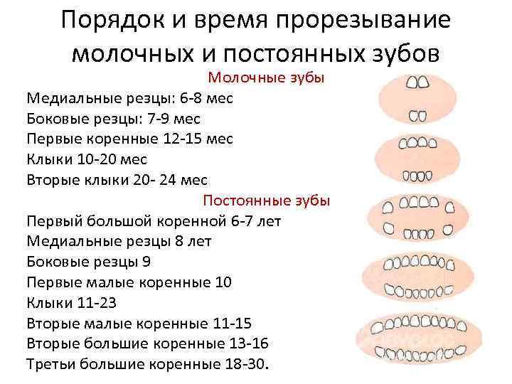 Особенности молочных зубов: сколько их должно быть - много зубов