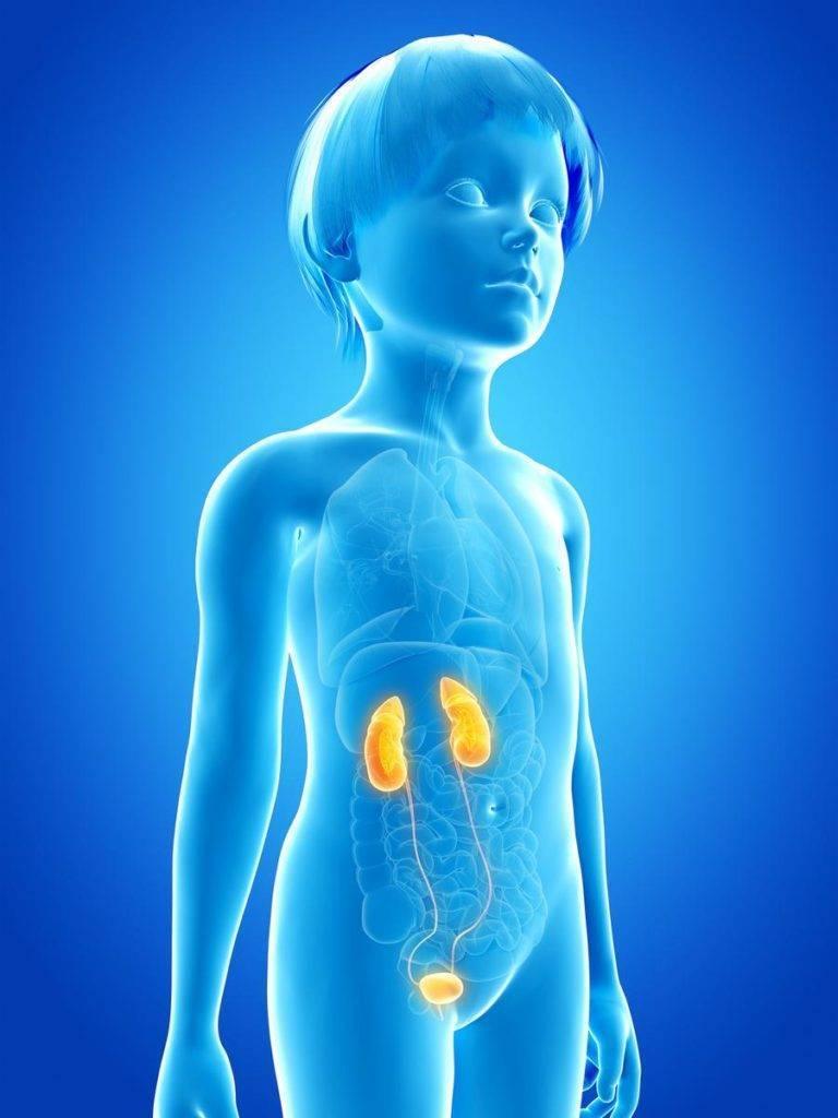 Воспаление мочеполовой системы у детей