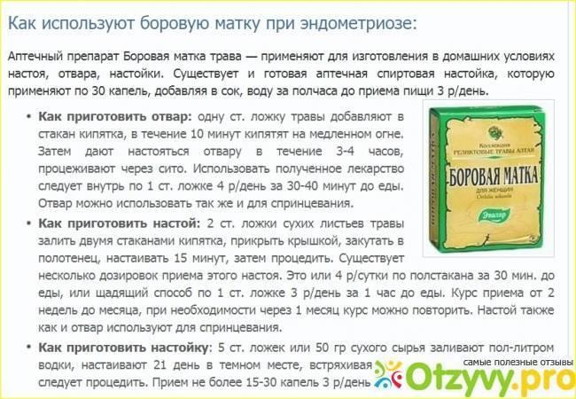 Боровая матка чтобы забеременеть: помогает ли? / mama66.ru