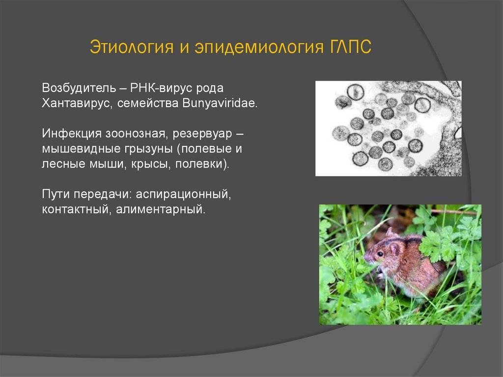 Мышиная лихорадка у детей: симптомы, инкубационный период, лечение
