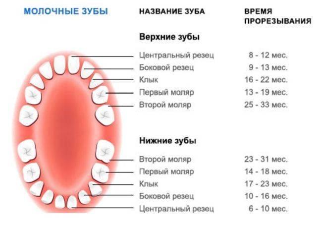 Когда выпадают молочные зубы у детей?