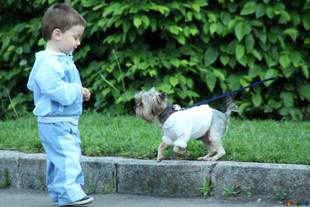 Куда обратиться, если собака укусила ребенка?