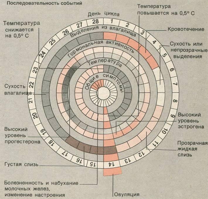 Плюсы и минусы календарного метода предохранения от беременности